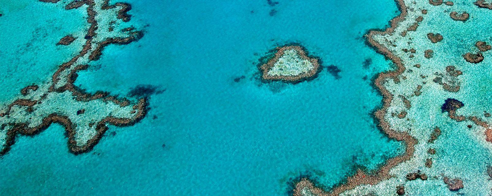 La gran barrera de coral , Australia