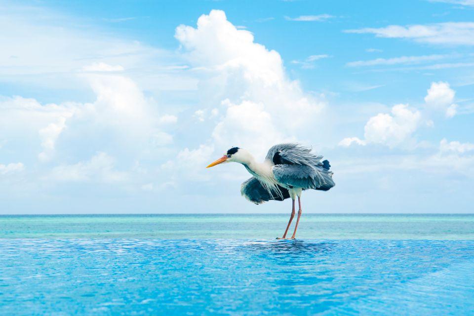 Un airone grigio, La fauna terrestre, La fauna e la flora, Maldive