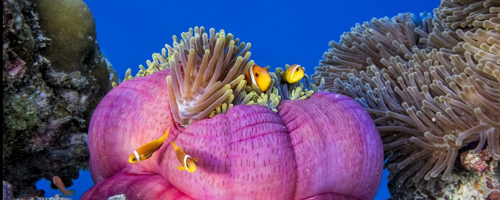 Marine Wildlife The Maldives Maldive Islands