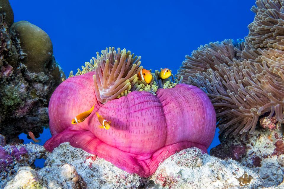 Fauna marina, La fauna marina, Fauna y flora, Maldivas