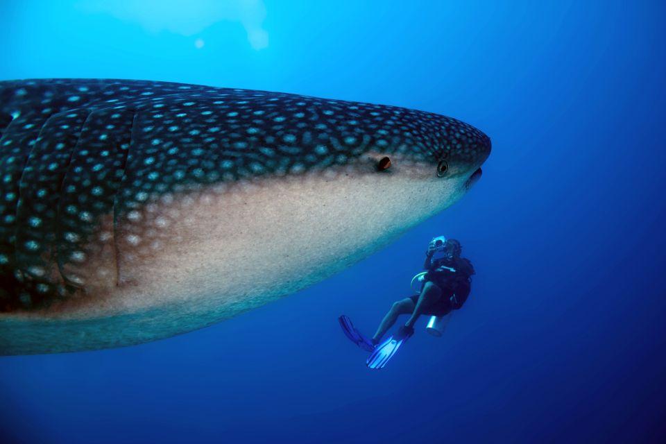 Submarinismo en las Maldivas, La fauna marina, Fauna y flora, Maldivas
