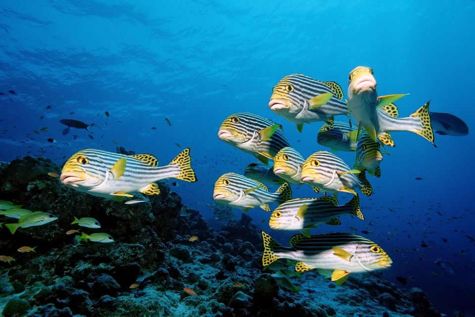Marine wildlife - The Maldives - Maldive Islands