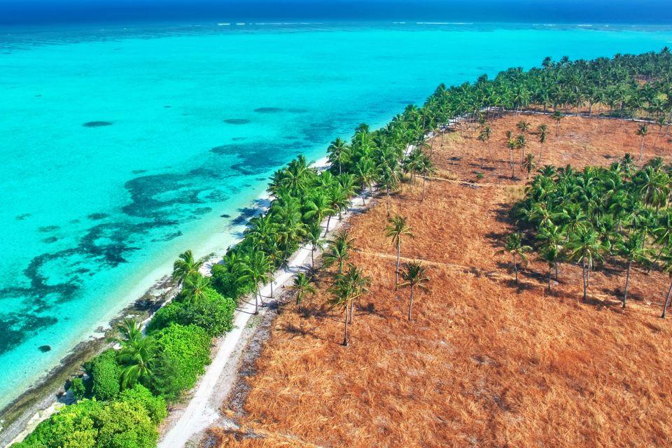 Noci di cocco, La flora, La fauna e la flora, Maldive