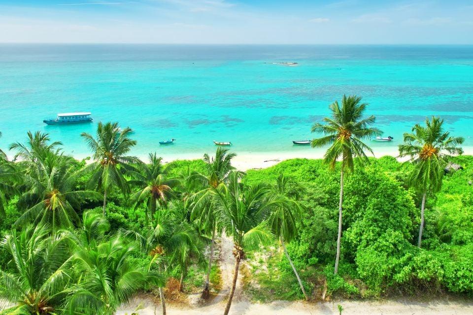 Giungla tropicale, La flora, La fauna e la flora, Maldive