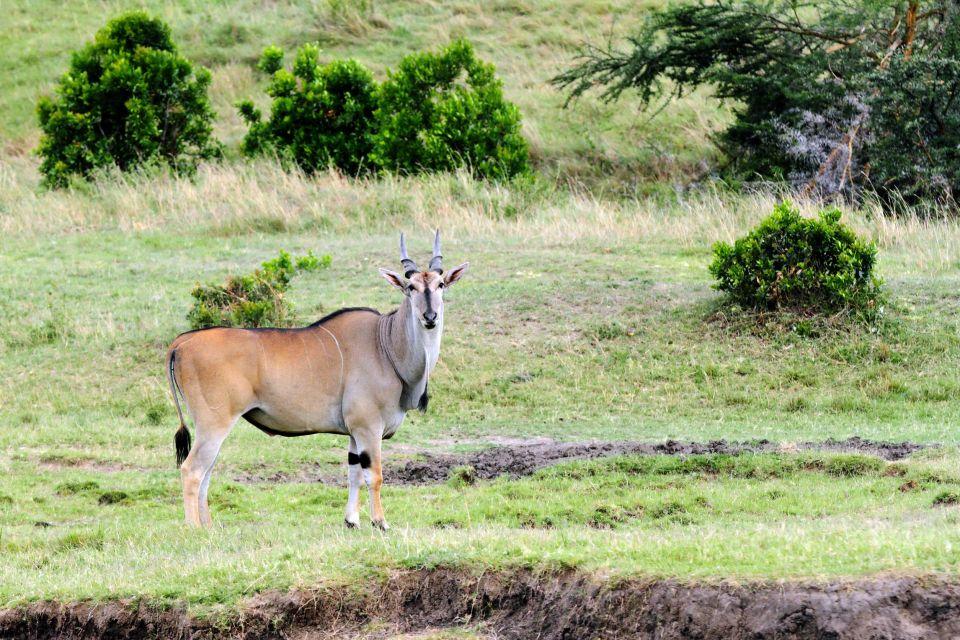La faune et la flore, Mali afrique parc réserve baoulé savane faune mammifère animal antilope Eland de Derby.