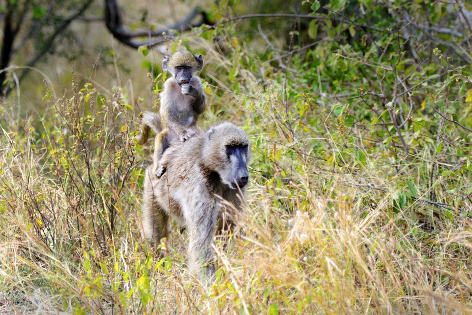 , The Bafing reserve, The fauna and flora, Mali