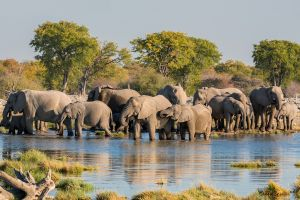 La faune et la flore, gourma reserve mali afrique éléphant pachiderme faune mammifère animal big five