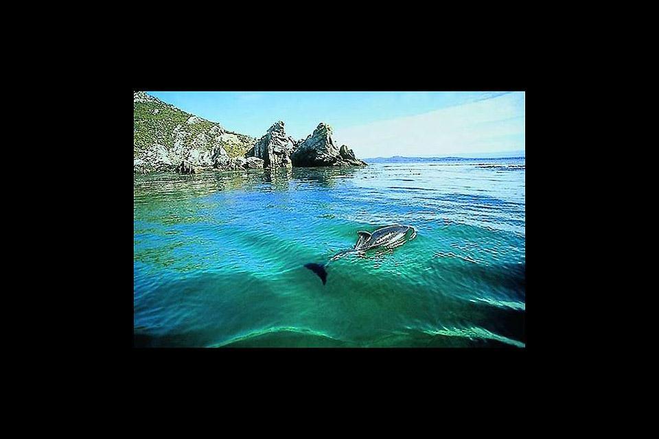 The Western Falklands , Western Falkland , The Falkland Islands