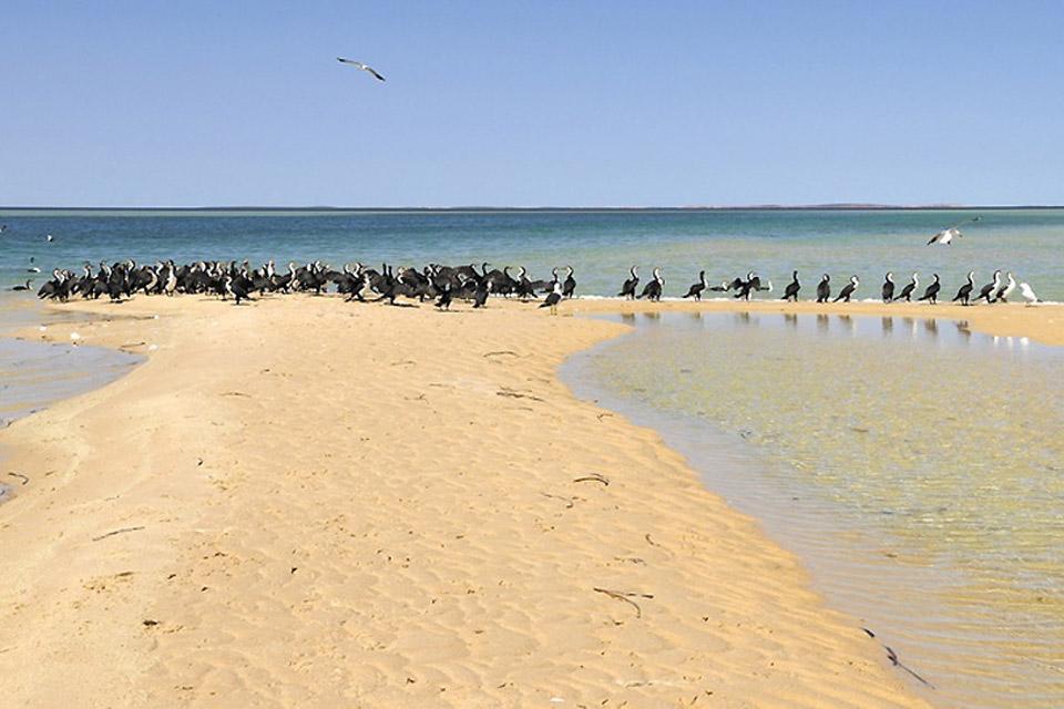 Die Monkey Mia-Halbinsel (Westküste) , Australien
