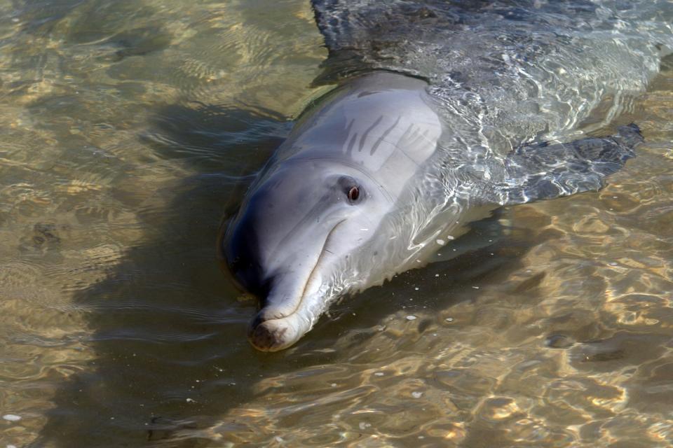 Die Monkey Mia-Halbinsel (Westküste) , Der Delfinstrand , Australien