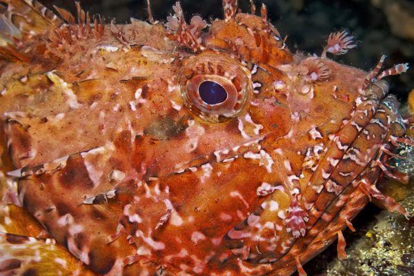Malta's fish and other wonders, Marine wildlife, The fauna, Malta