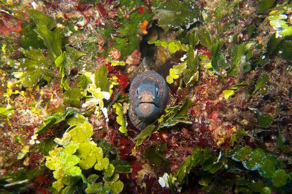 , Marine wildlife, The fauna, Malta