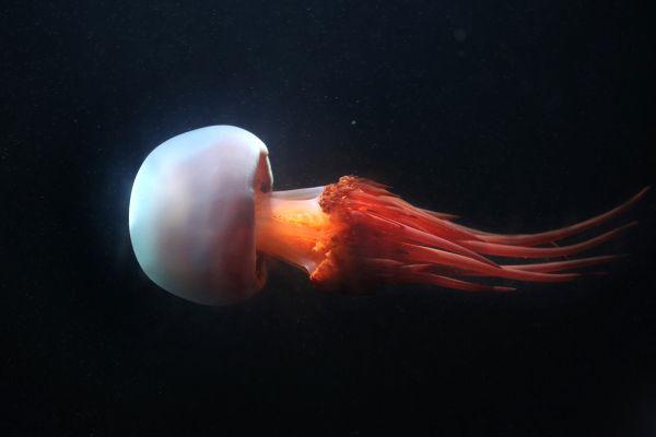 Marine wildlife, The fauna, Malta