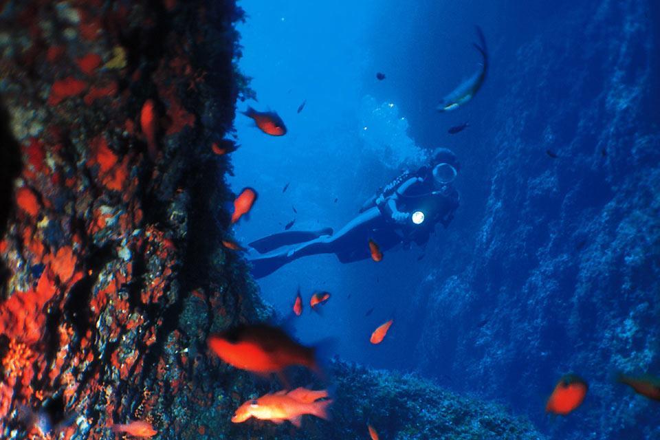 La fauna subacquea , Malta