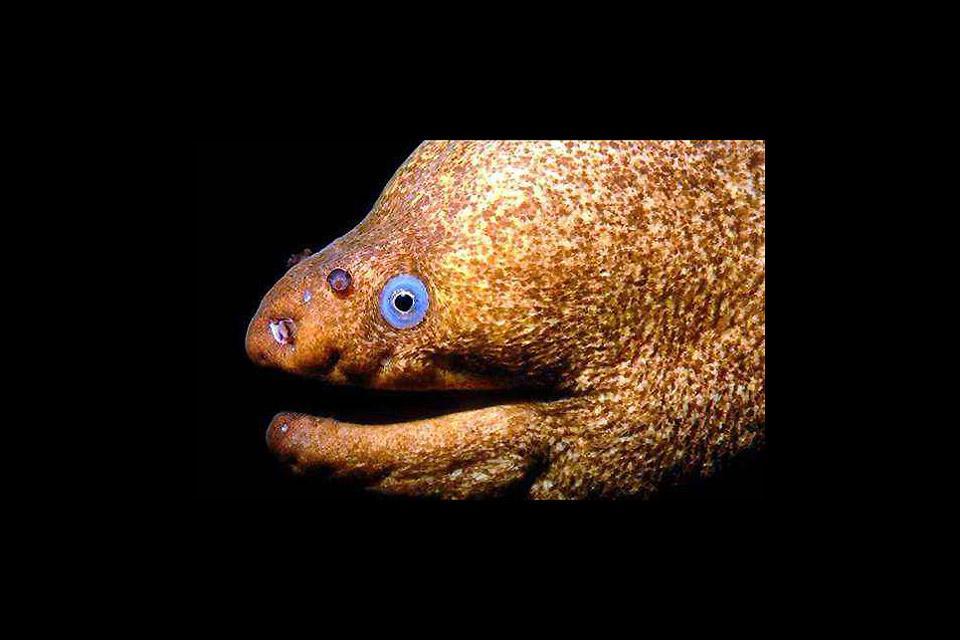 Underwater wildlife , Guadelupe