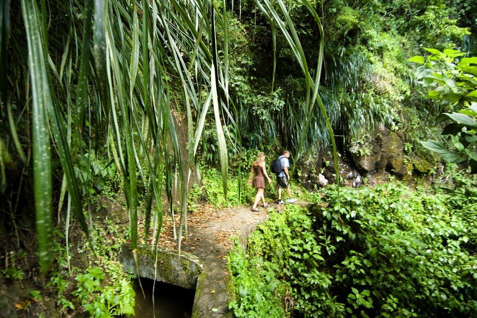 Escursione sulla Montagna Pelée, La montagne Pelée, I paesaggi, Fort-de-France, Martinica