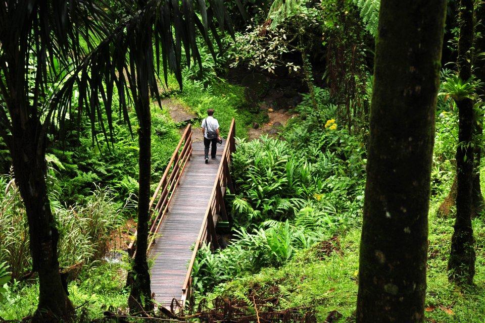 , Le gole di La Falaise, I paesaggi, Martinica