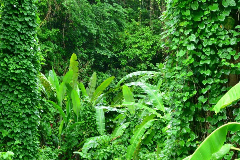 La strada delle Traces, Le gole di La Falaise, I paesaggi, Martinica