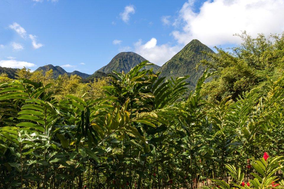 Cascate in Martinica, Le gole di La Falaise, I paesaggi, Martinica