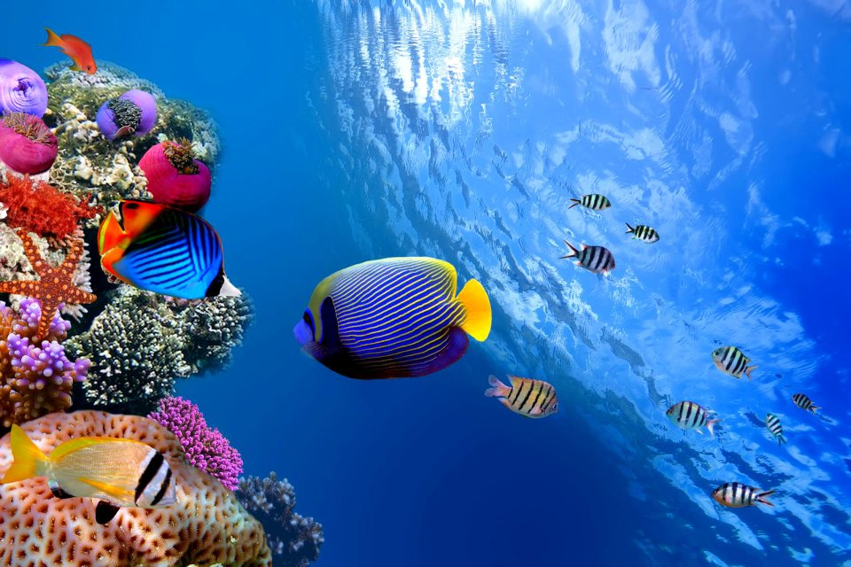 La faune, Antilles, caraibes, ile, martinique, outre-mer, dom-tom, amerique, faune, animal, mer, poisson