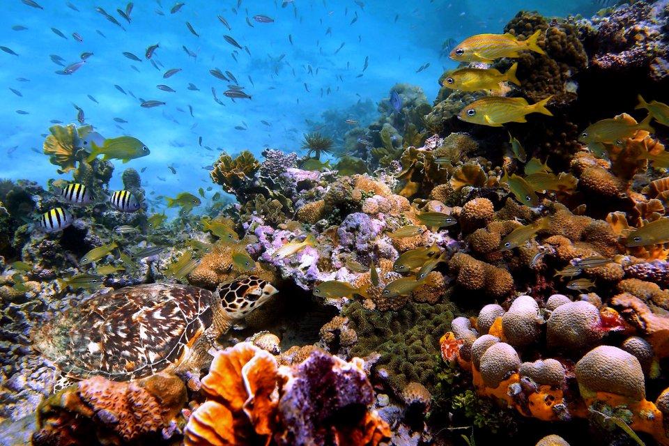 La faune, Antilles, caraibes, ile, martinique, outre-mer, dom-tom, amerique, faune, animal, mer, reptile, tortue, recif, poisson