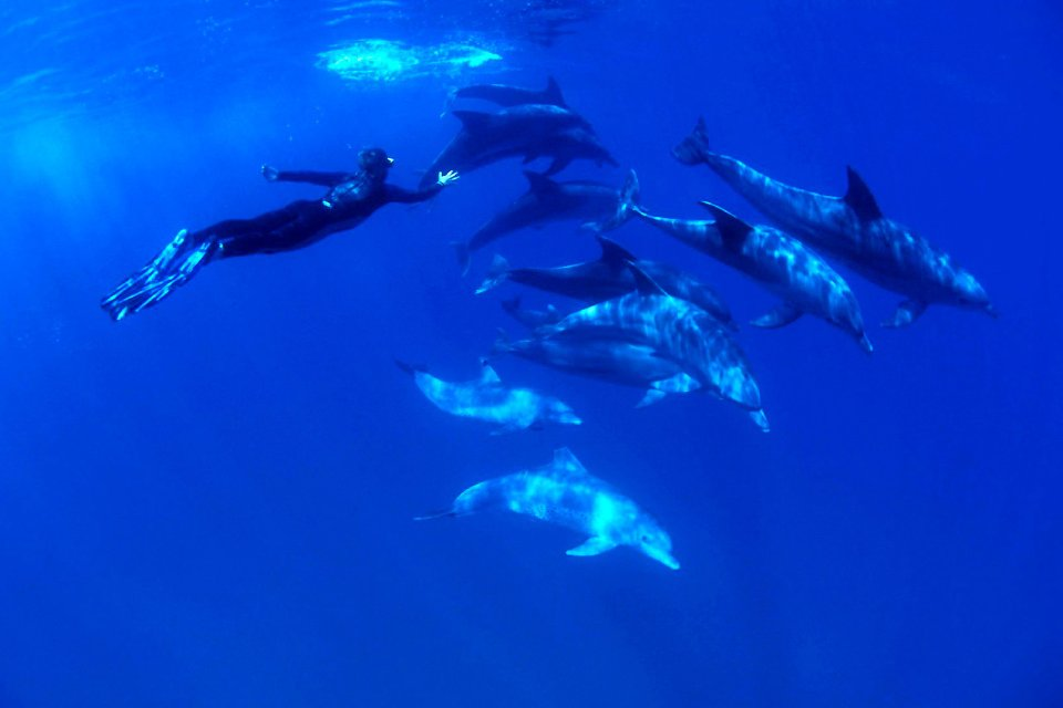 La faune sous-marine , Plonger avec les dauphins , Martinique