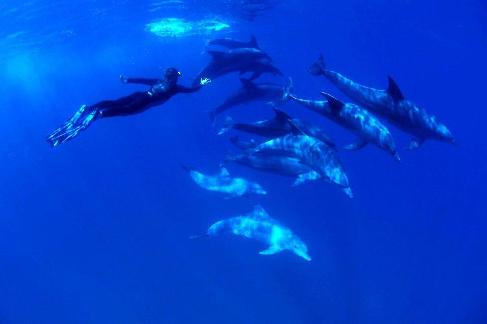 La faune, Antilles, caraibes, ile, martinique, outre-mer, dom-tom, amerique, faune, animal, mer, dauphin, mammifere, plongeur, plongee