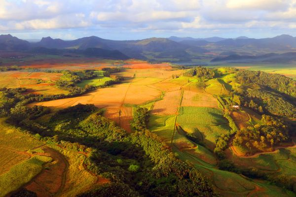 Las plantaciones de la isla Mauricio, Les plantaciones de té, Los paisajes, Isla Mauricio