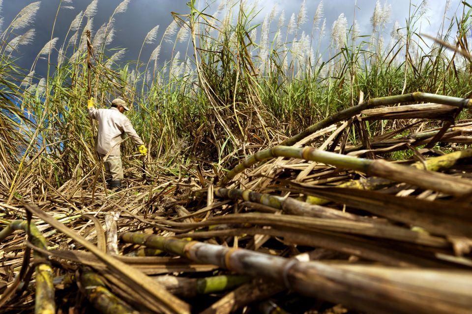 The Bois Chéri plantations, Mauritius, Tea plantations, Landscapes, Mauritius