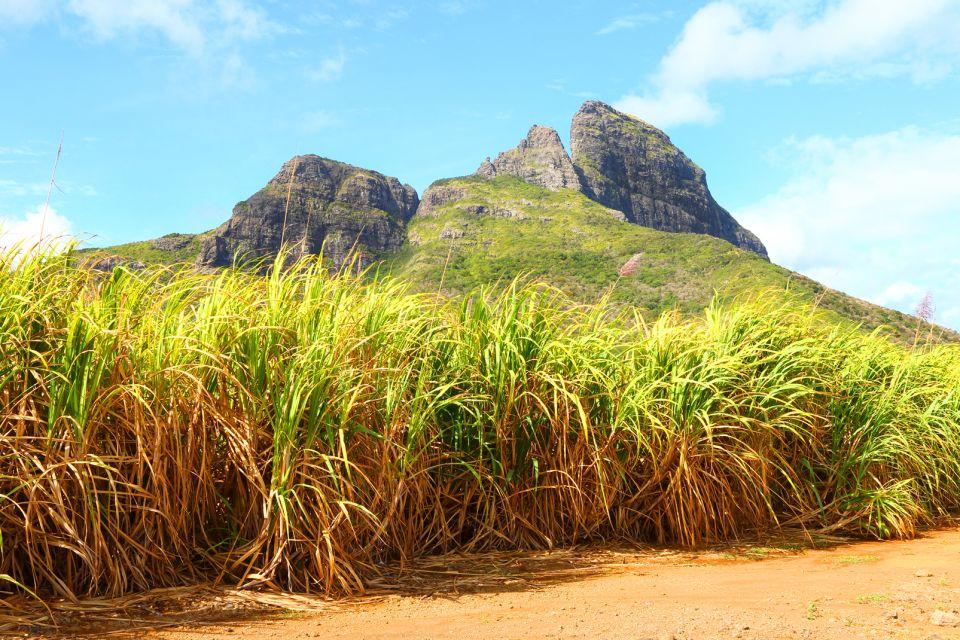 Sugar plantations, Mauritius, Tea plantations, Landscapes, Mauritius