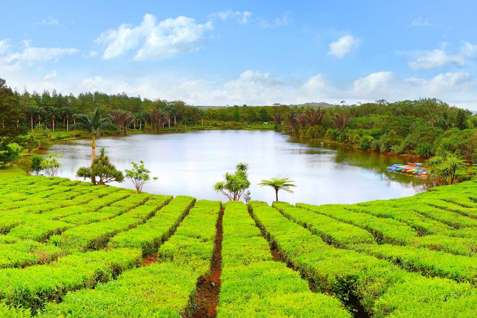 Les paysages, océan indien, culture, agriculture, afrique, île, maurice, thé, plantation