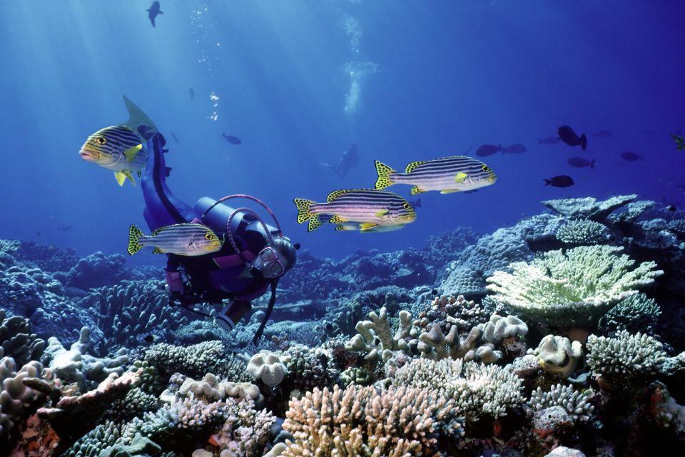 Les îles, Maurice, île, océan indien, afrique, coin de mire, plongée, plongeur, sous-marine, poisson, faune, gaterin