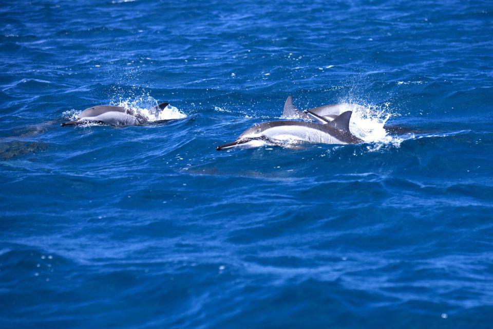 Las aguas del sudoeste, La Isla de las Pilas de Agua Bendita, Las islas, Isla Mauricio