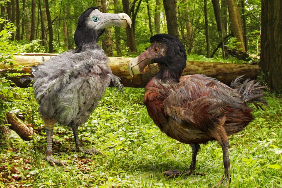 The dodo, Mauritius, Birds, The fauna, Mauritius