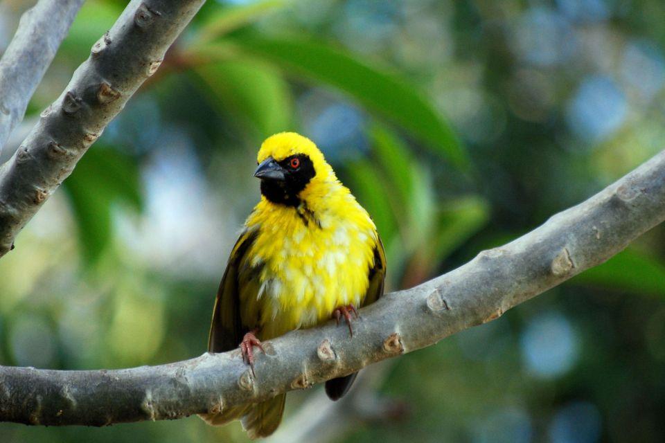 Rivière Noire, Mauritius, Birds, The fauna, Mauritius