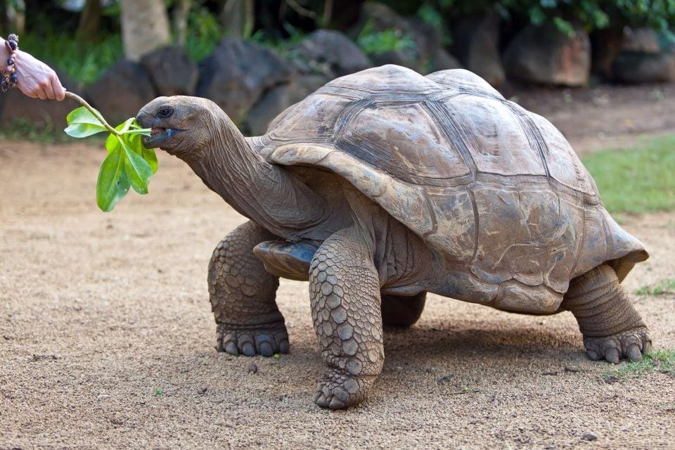 Turtles, Mauritius, Birds, The fauna, Mauritius