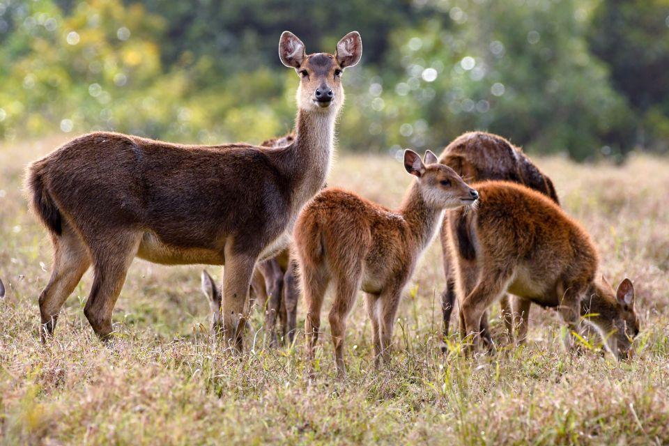 Deer, Mauritius, Birds, The fauna, Mauritius