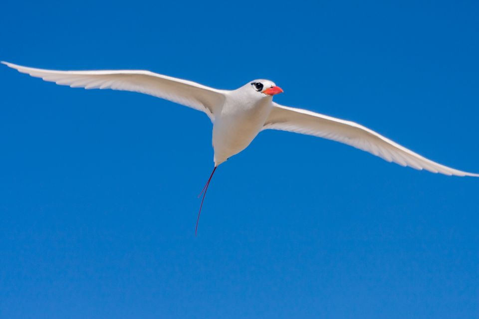 Mauritian fauna, Birds, The fauna, Mauritius