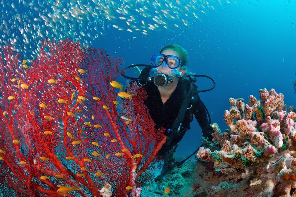 La faune, plongée, sous-marine, animal, faune, océan indien, océan, afrique, poisson, corail, plongeur
