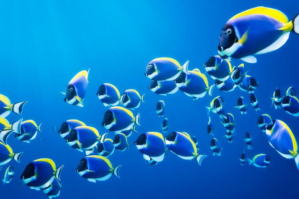 La varietà della fauna sottomarina, La fauna marina, La fauna, Isola Mauritius