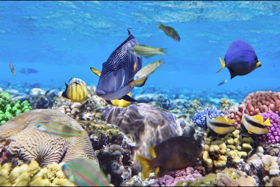 Il pesce pagliaccio, La fauna marina, La fauna, Isola Mauritius