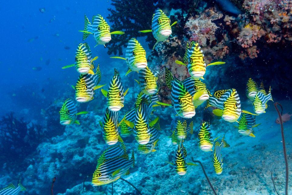 La faune, plongée, sous-marine, animal, faune, océan indien, océan, afrique, poisson, gaterin