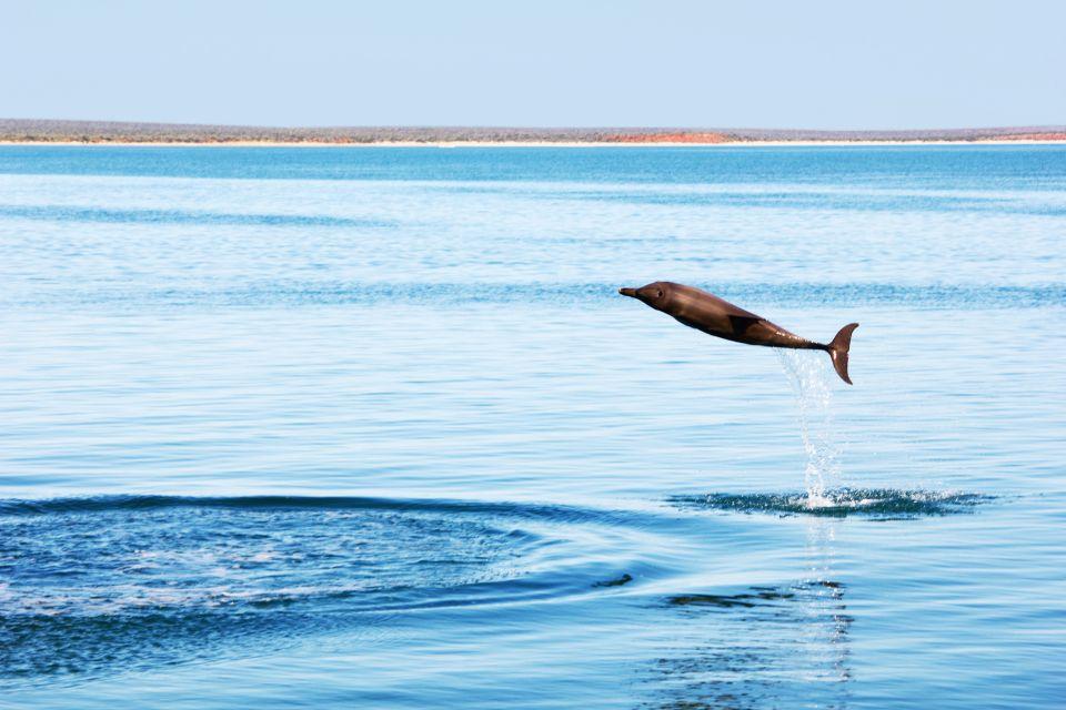 I delfini, La fauna marina, La fauna, Isola Mauritius