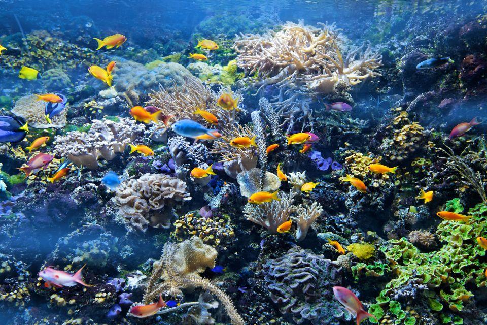 La fauna sottomarina, La fauna marina, La fauna, Isola Mauritius