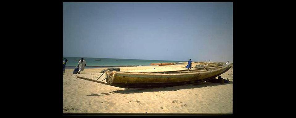 Le Parc National Du Banc Darguin Mauritanie