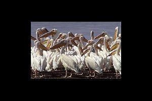 Le Parc National Du Diawling Mauritanie