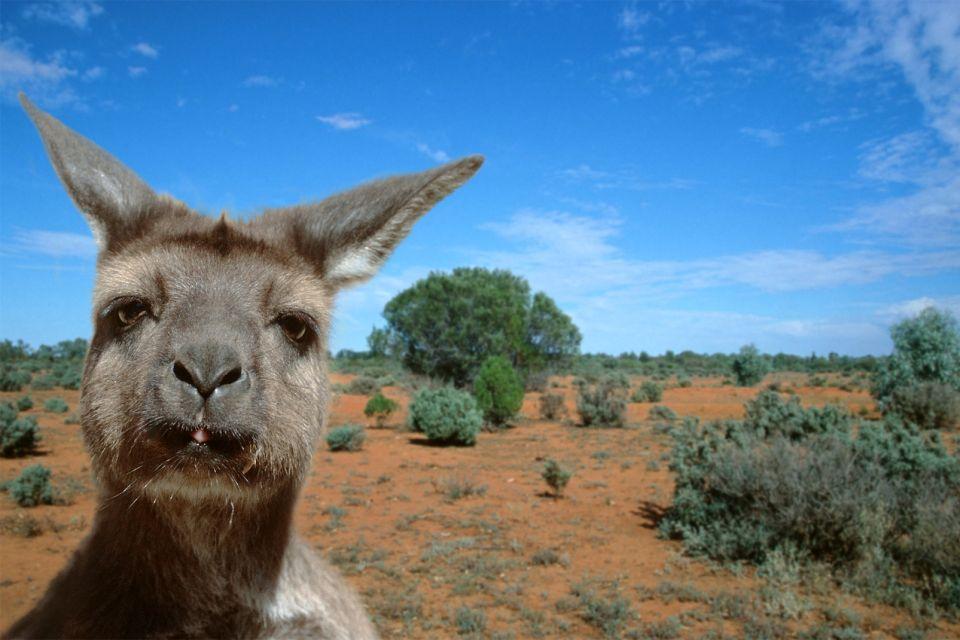 Beuteltiere, Die Beuteltiere, Die Fauna, Australien