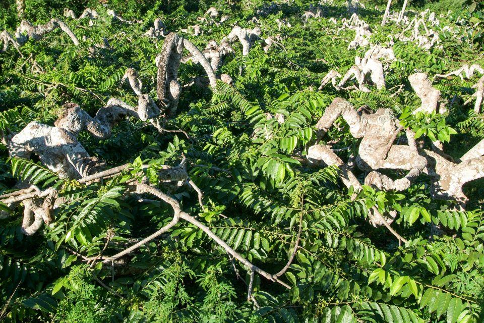 , Grande Terre - The farm landscapes, Landscapes, Mayotte