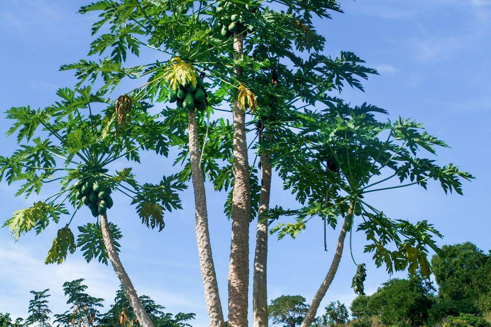 Grande Terre - The farm landscapes, Landscapes, Mayotte