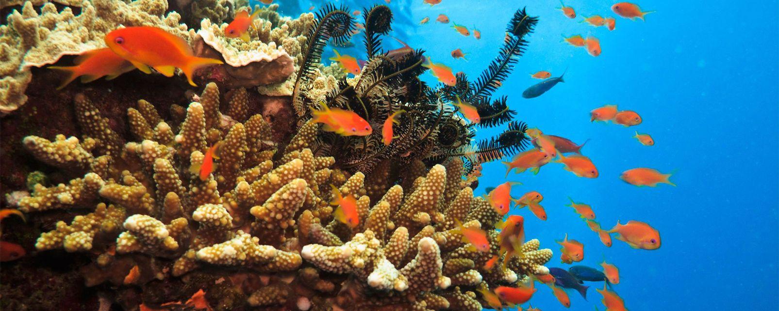 La vida submarina , La gran barrera de coral , Australia
